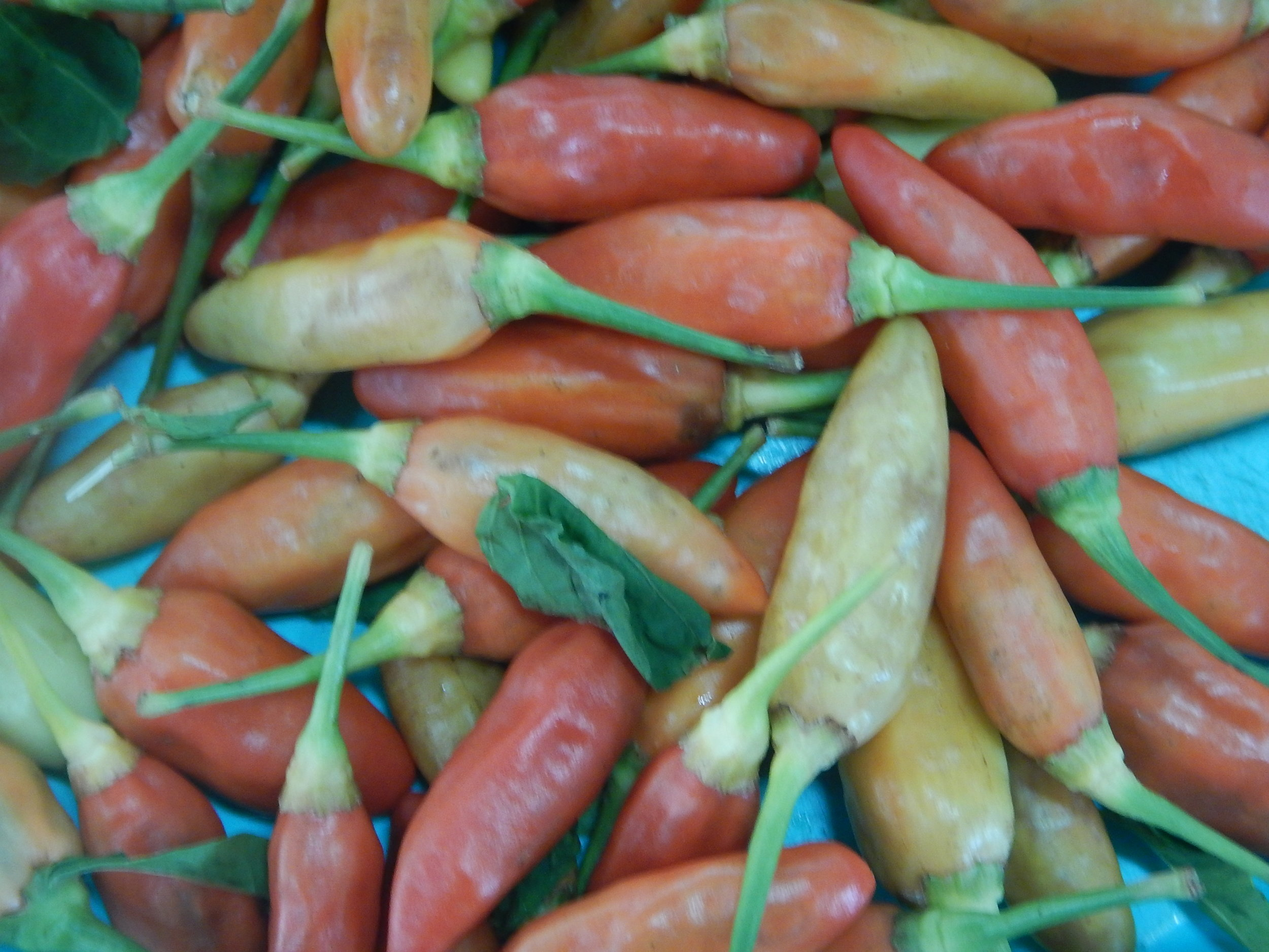 And a great assortment of chillies