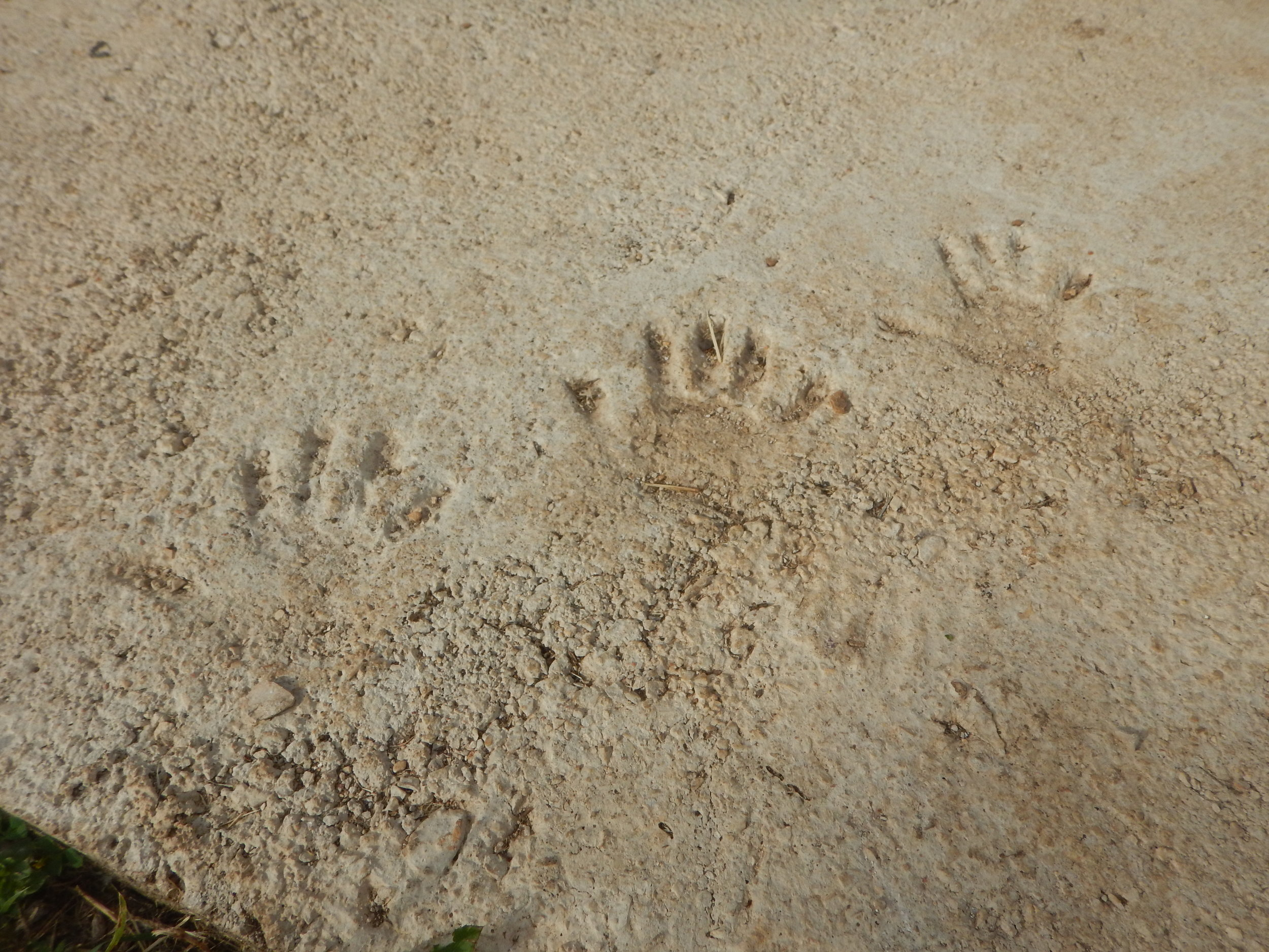 her children's handprints in fresh cement. Don't we all do this!!