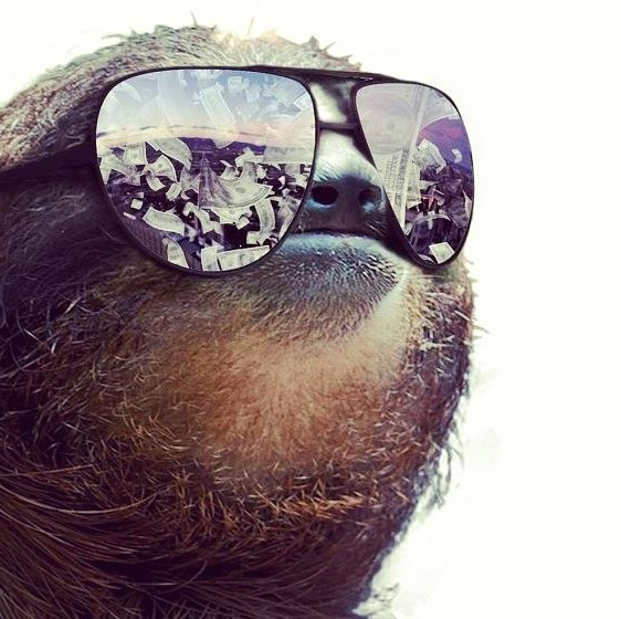 sloth-sunglasses-shades-money-reflection-1370560632N.jpg