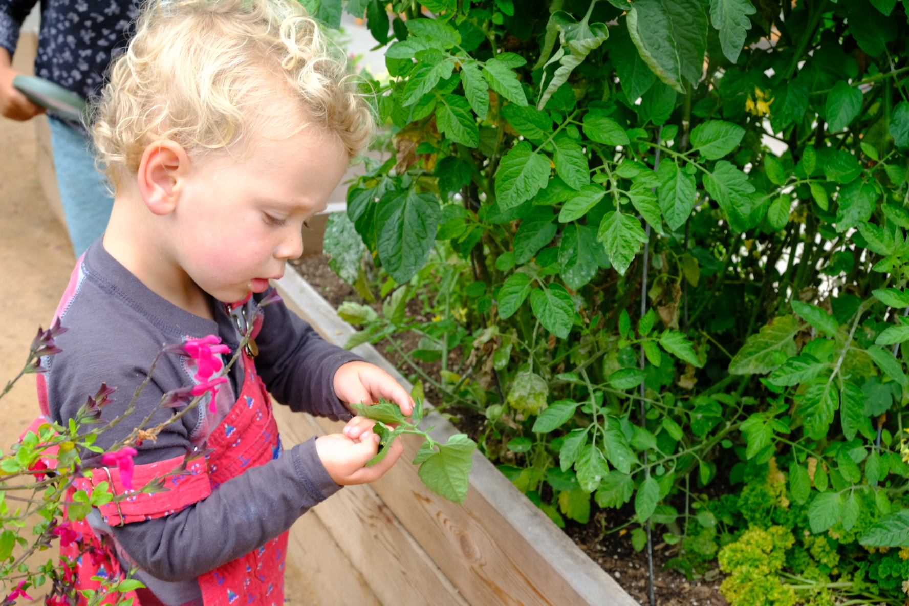 """ROLE OF THE ENVIRONMENT - The school environment serves as a """"third teacher"""", engaging children's interests, inspiring learning, and supporting autonomy."""