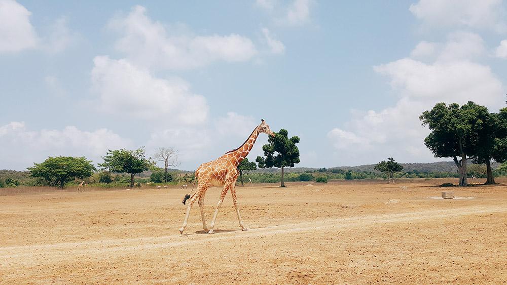 Calauit Safari Park