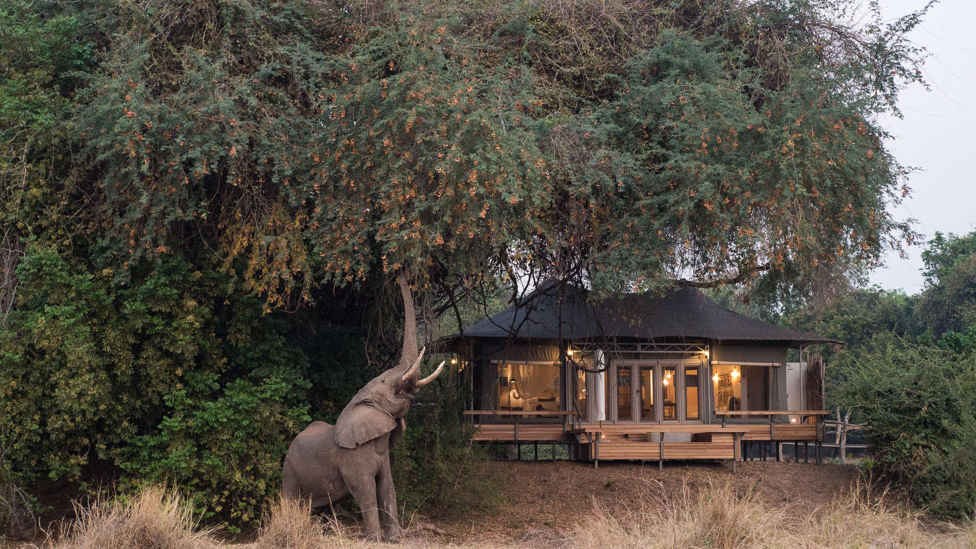Chikwenya 1 - Wilderness Safaris.jpg