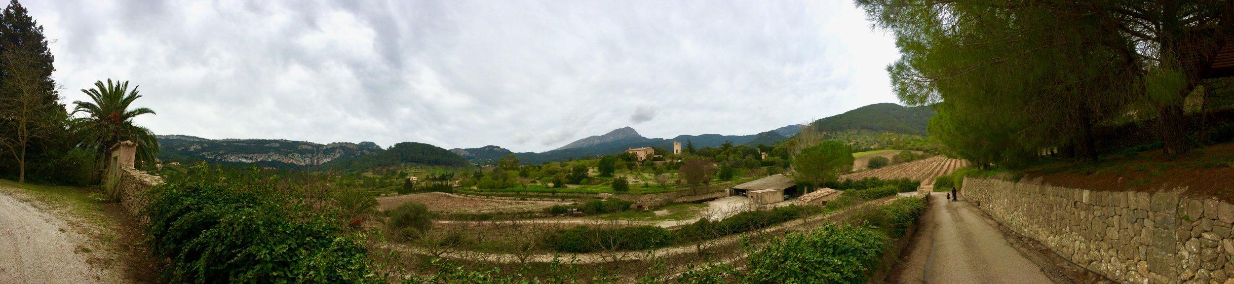 Terraced vineyards of Majorca