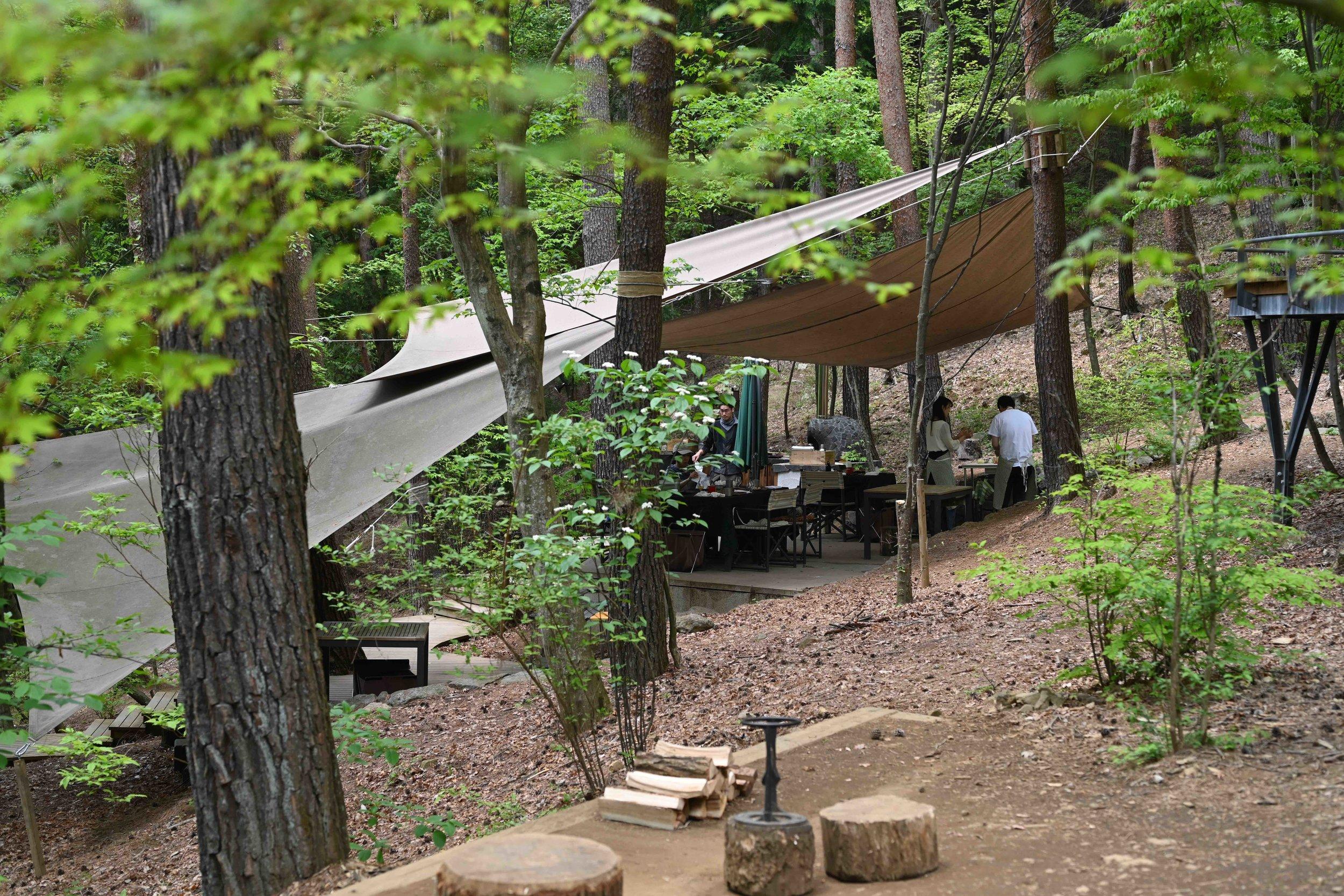 Forest kitchen.jpg