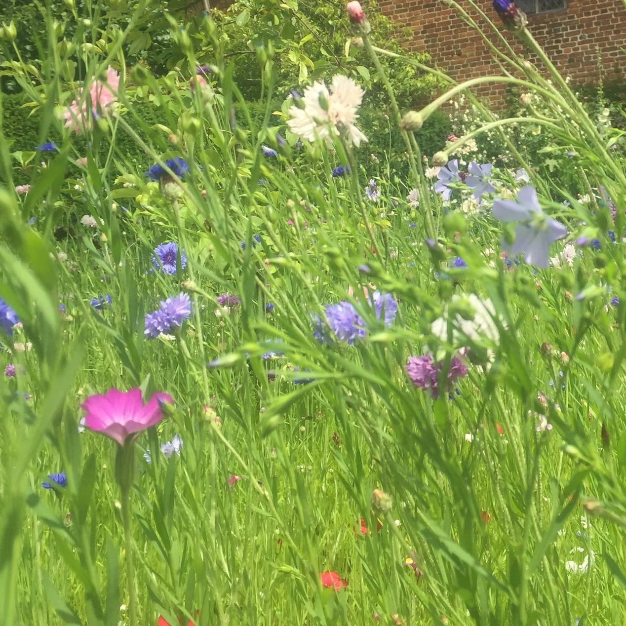 Wild Flower Meadows -