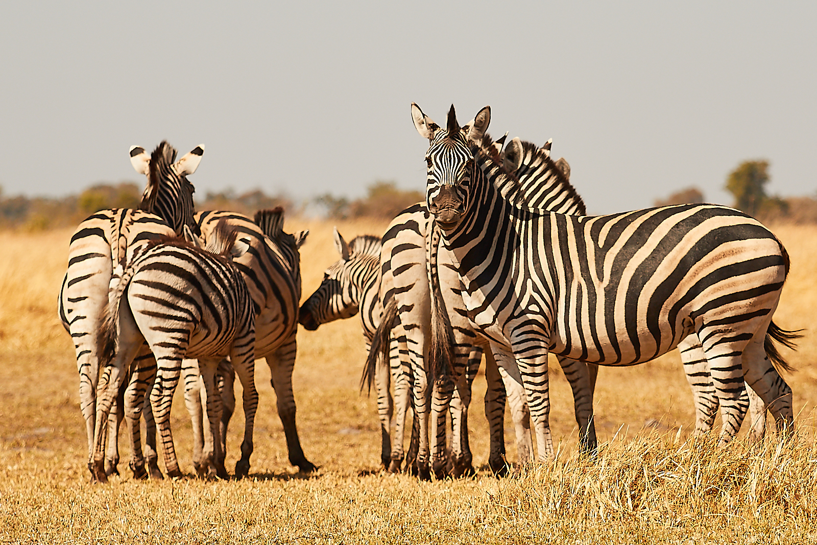 The Moremi gamedrive; wildlife at its very best!