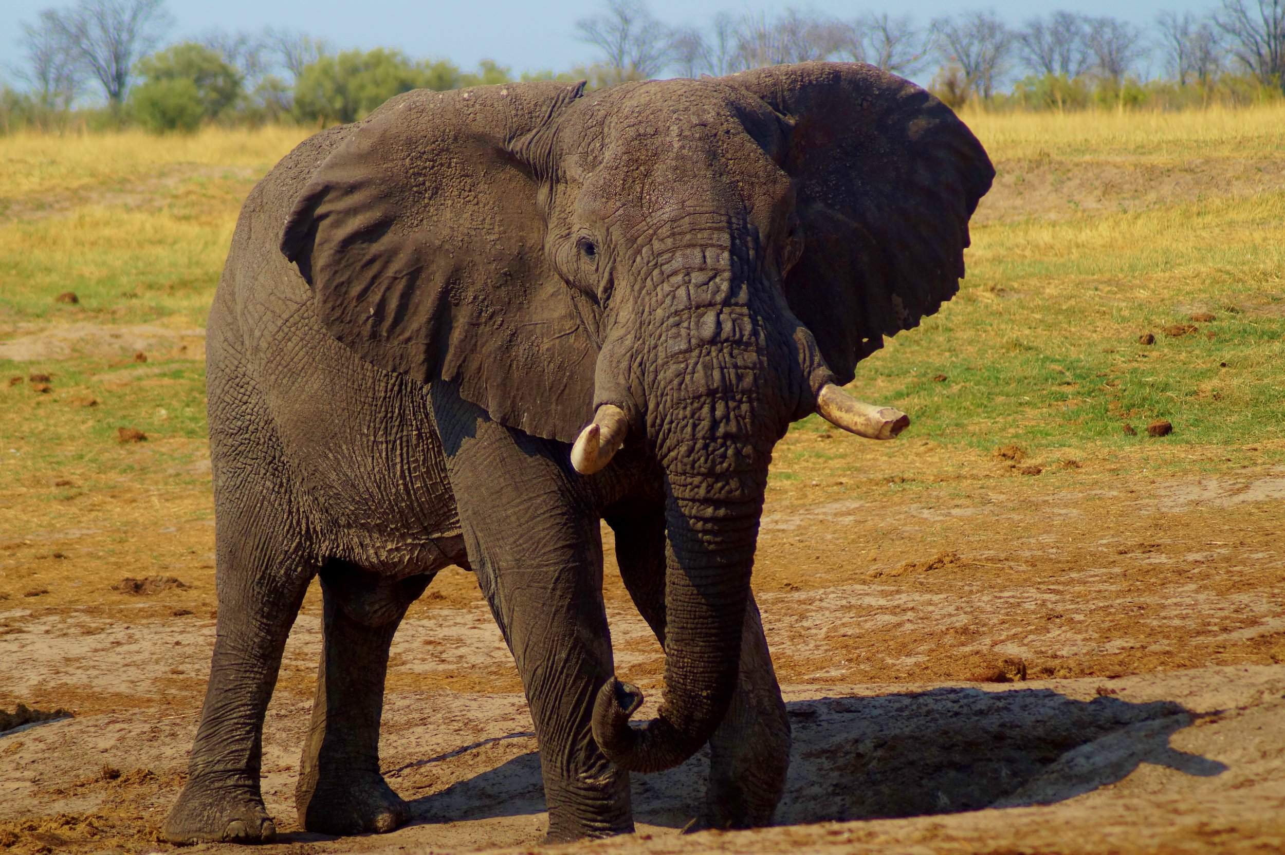 Elephant in Hwange Natioanl Park