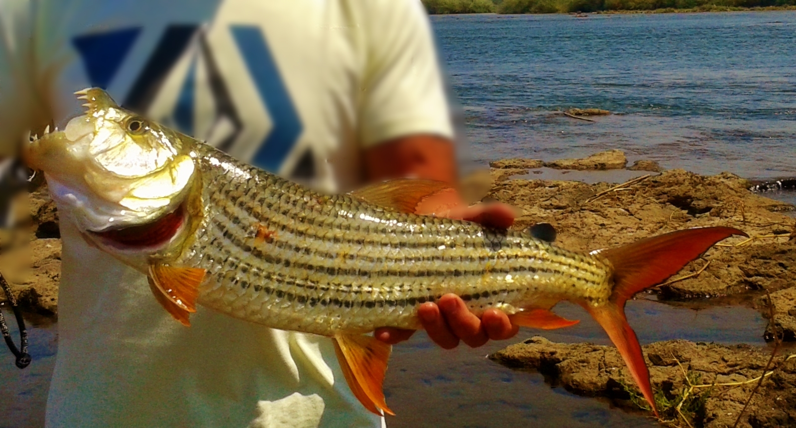 Tiger Fish on the Zambezi River