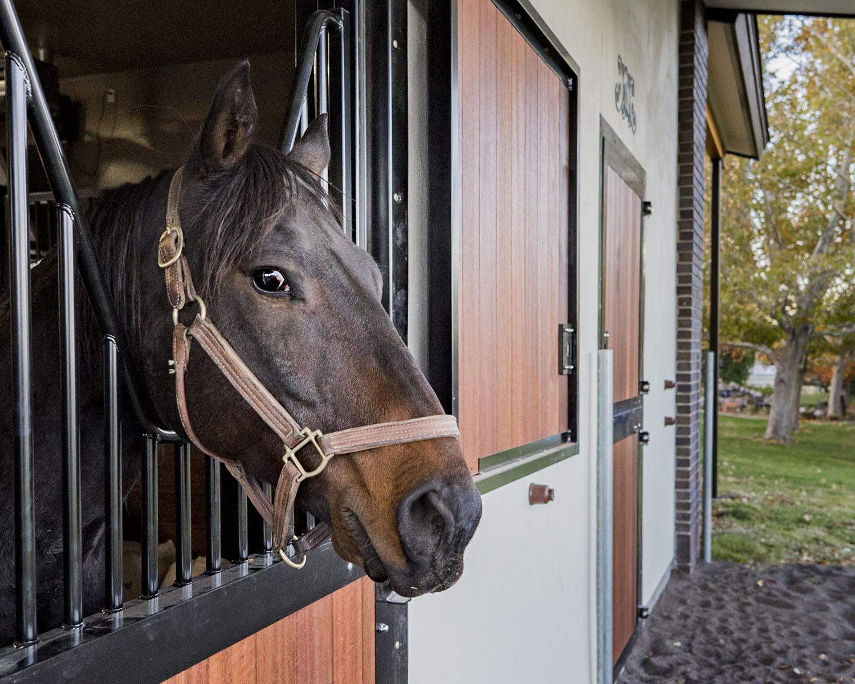 lepori_barn_happy_horse_view.jpg