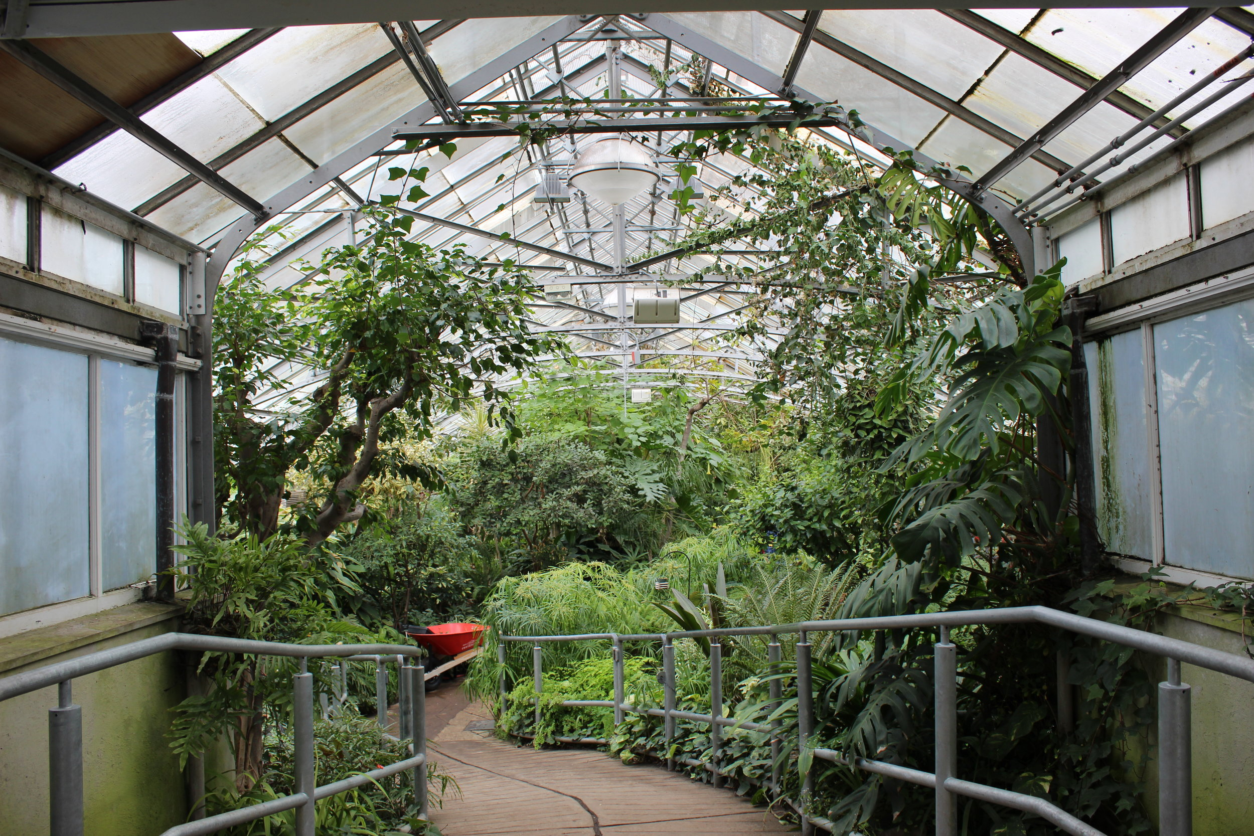 Allan Gardens' Cool Temperate house. (CanCulture/Jessica Fonseca)