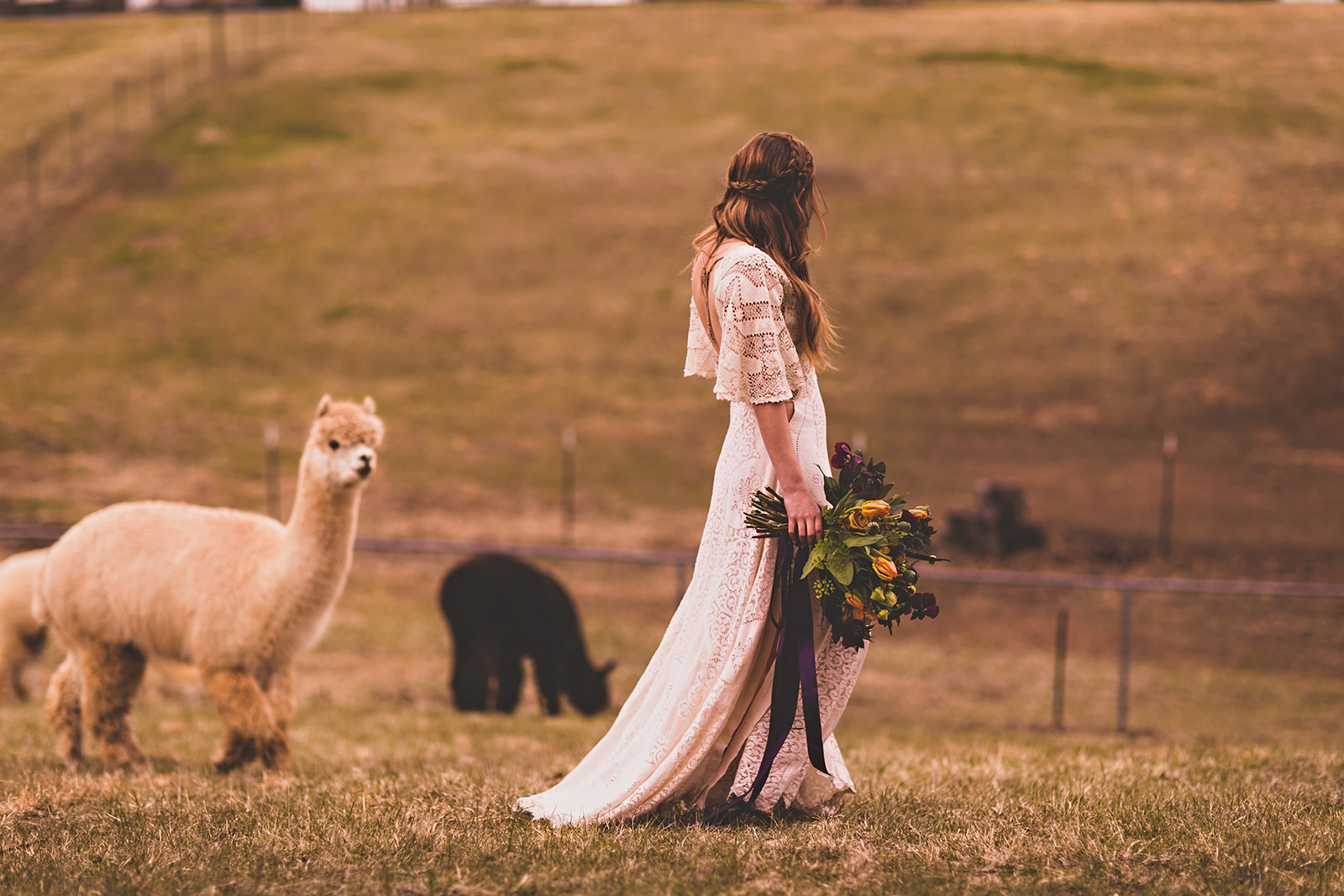 alpacas-150.jpg