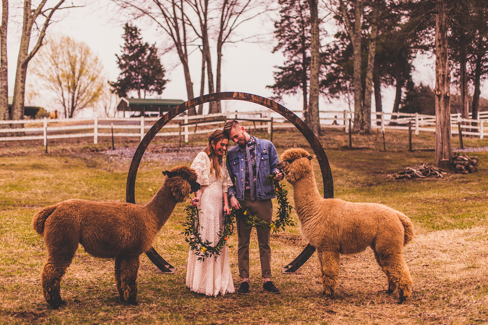 alpacas-233.jpg