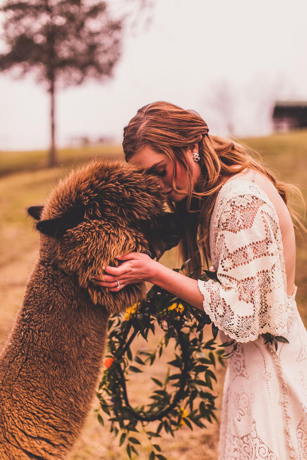 alpacas-247.jpg