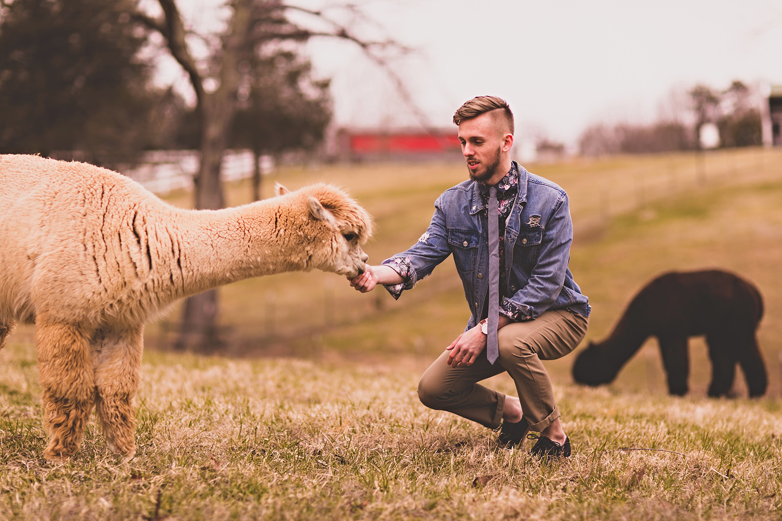 alpacas-116.jpg
