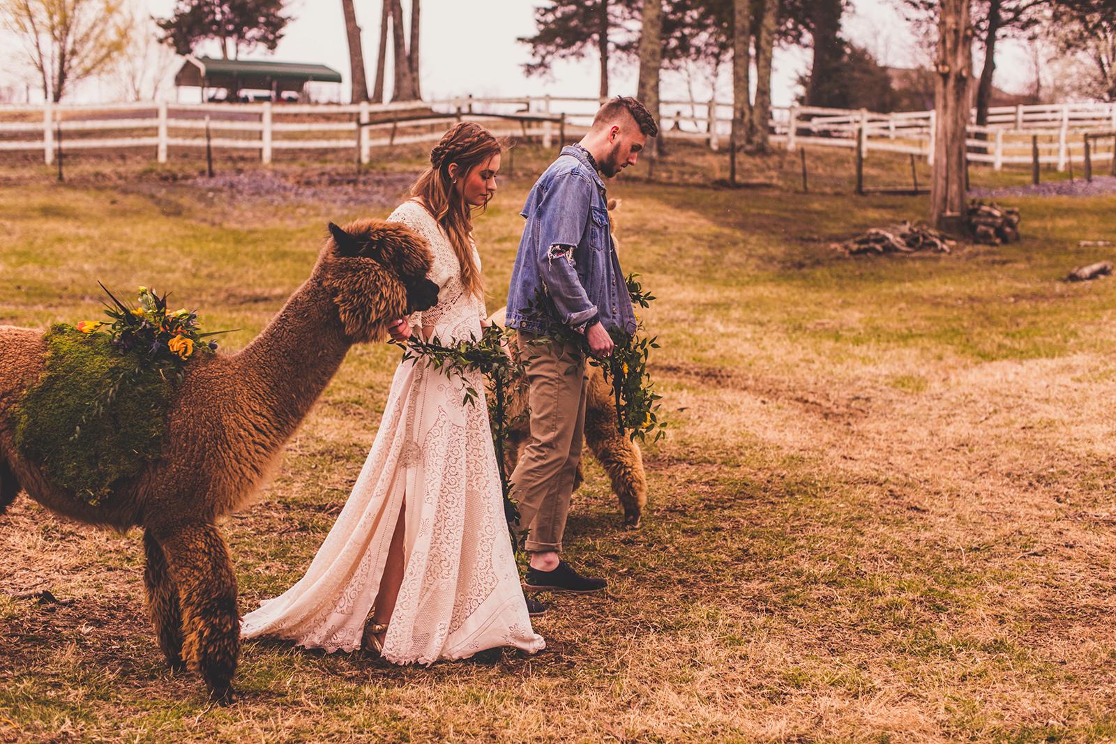 alpacas-269.jpg