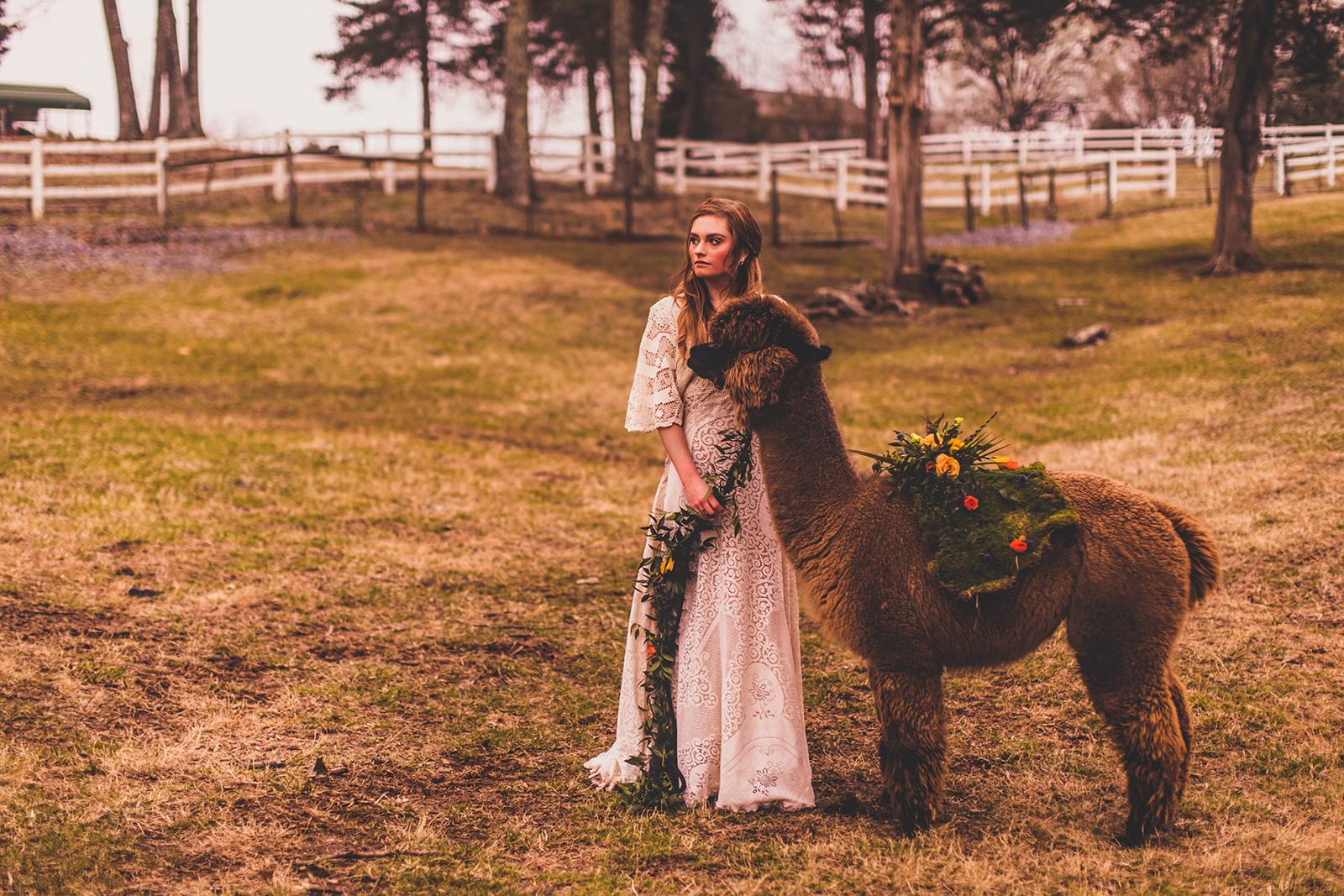alpacas-259.jpg