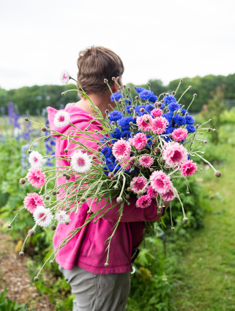 Claire with cornflowers.jpg