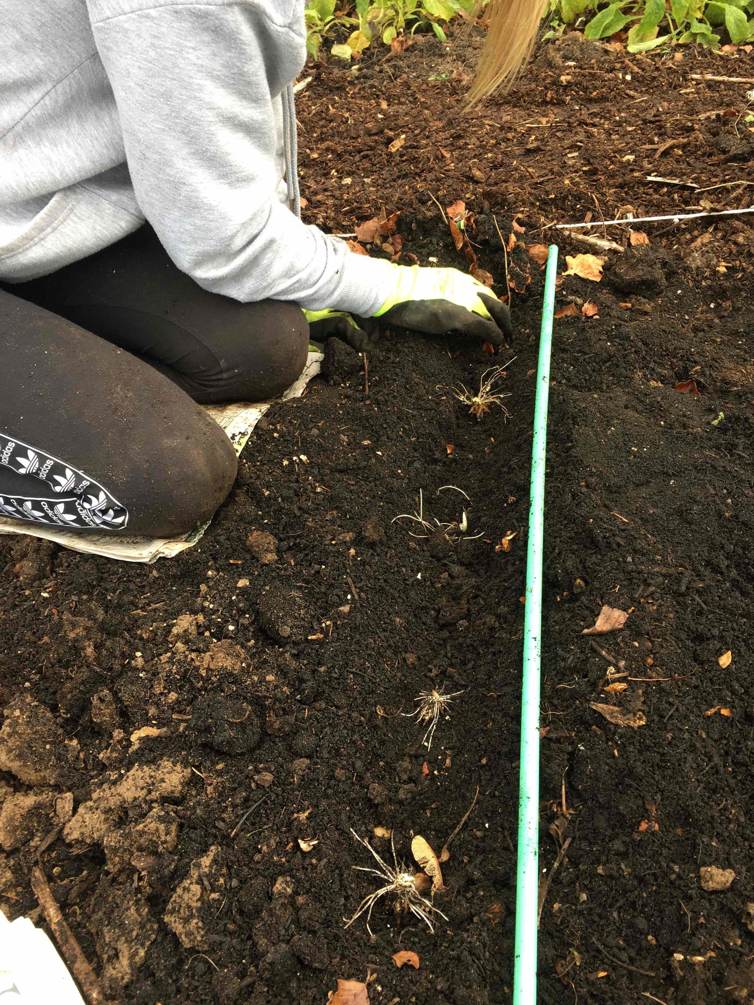Emma planting ranunculus close up.jpg