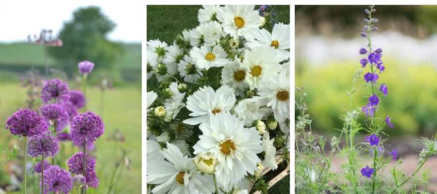Different flower shapes through the year