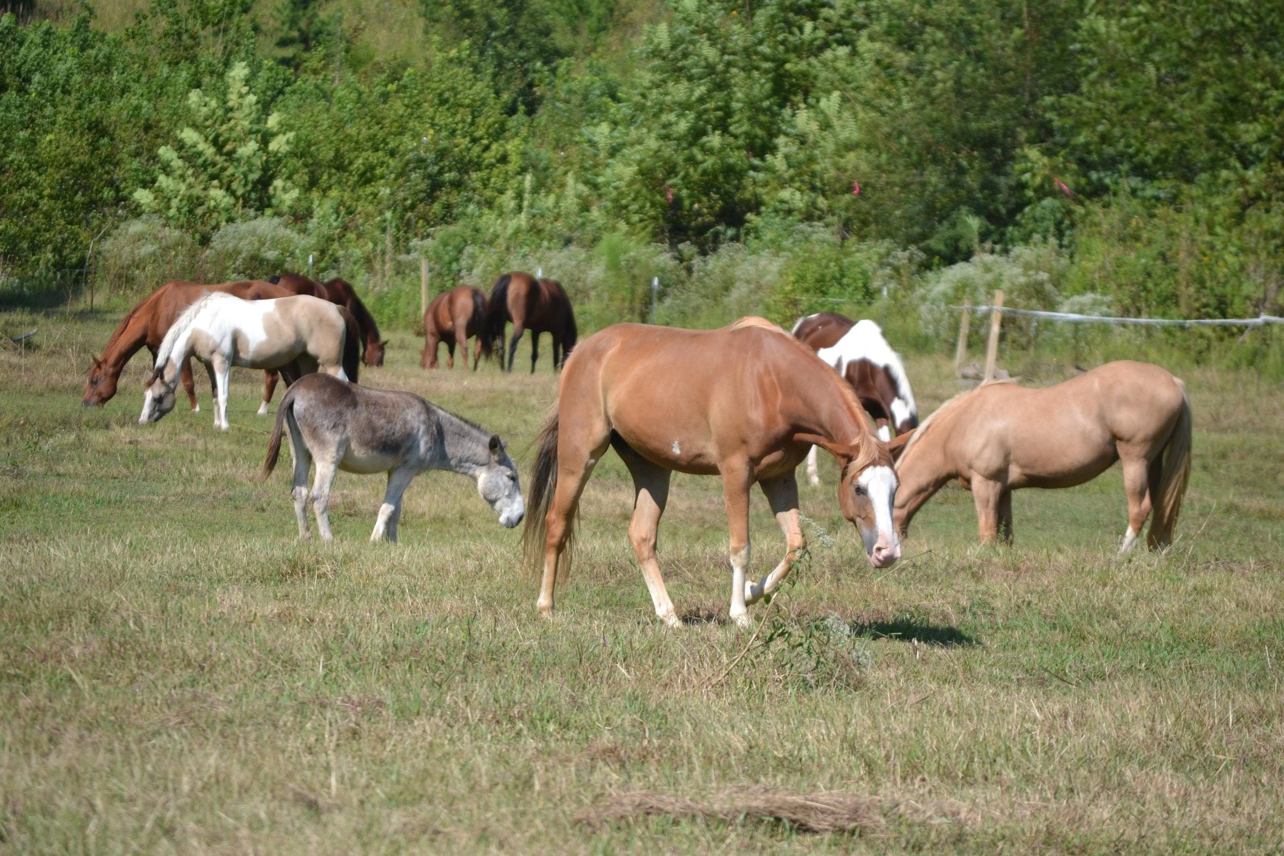HAPPY HORSES OF CREEKSIDE
