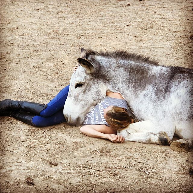 Because some mornings you just need to cuddle with your donkey 🥰 #BarnGirlLife #CreeksideAss #DonkeyLove