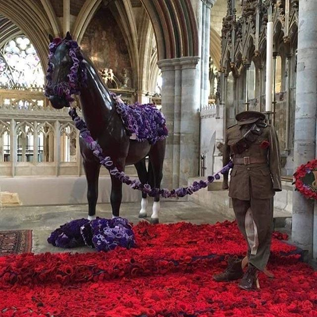 Red poppies for human veterans; purple poppies for animal veterans. Thank you, veterans. 🇺🇸