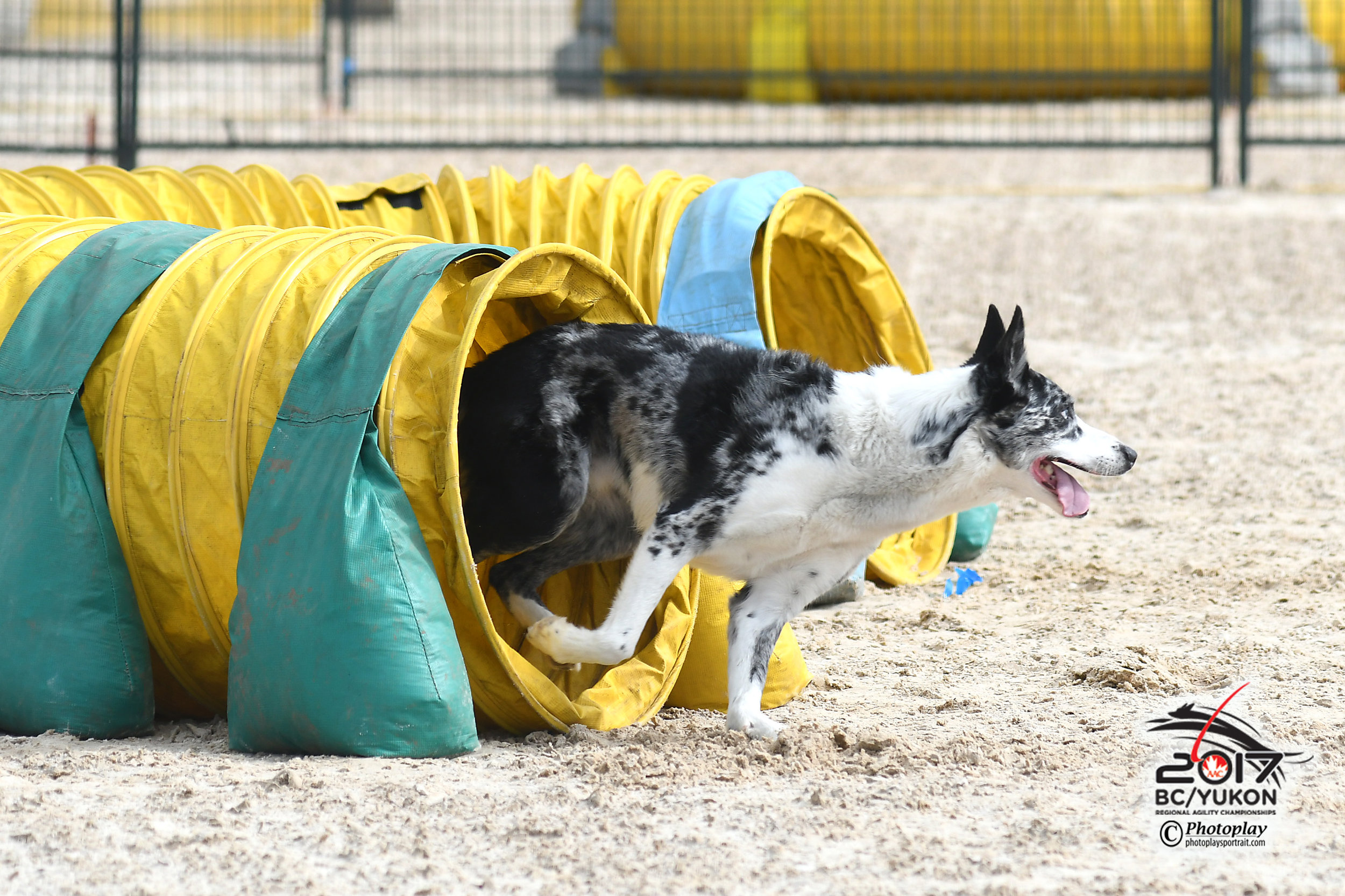 Agili-junkie    (noun)   A person who is obsessed and/or addicted to watching and/or doing dog agility.