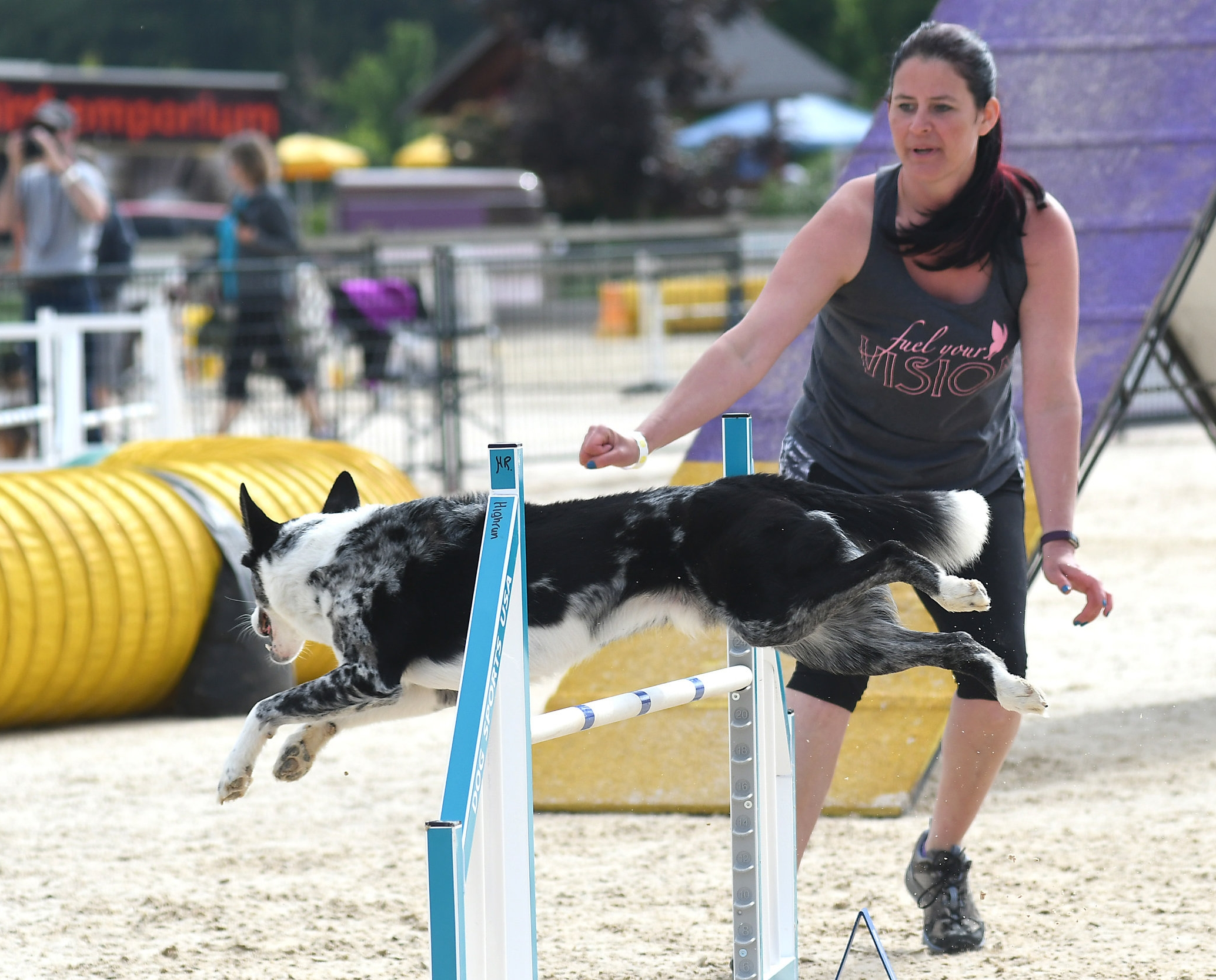 TRAINING   We offer beginner, intermediate, and advanced agility classes.   Learn more   .