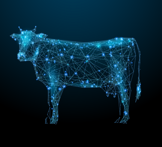 Technology on the Dairy -