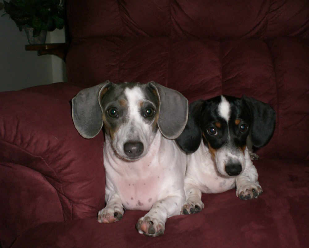Dachshunds Unlimited-Forever Home-8.png