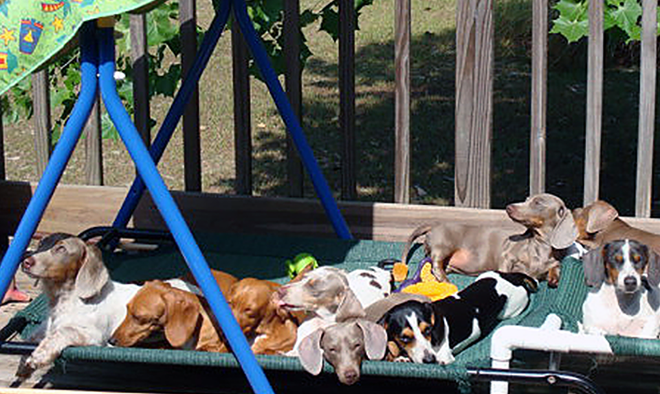 The sunny side of life at   Dachshunds Unlimited