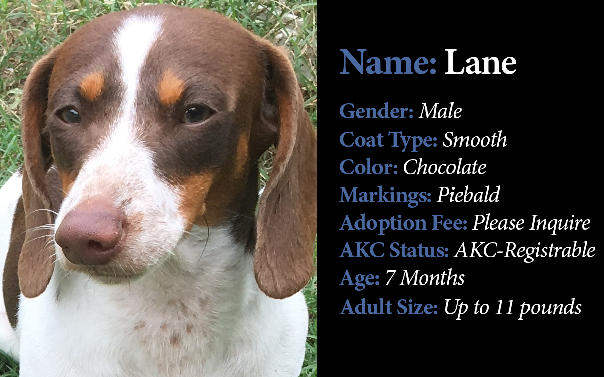 DU-Available Older Puppies-Lane.png