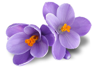 Crocus-PNG-Picture.png