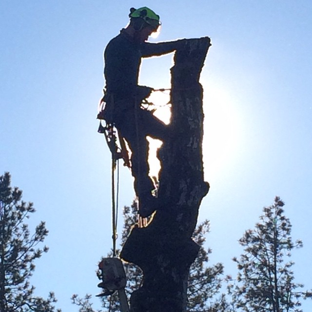 tree removal, tree care, tree pruning, wood chipping, forest grove, hillsboro, tigard, beaverton