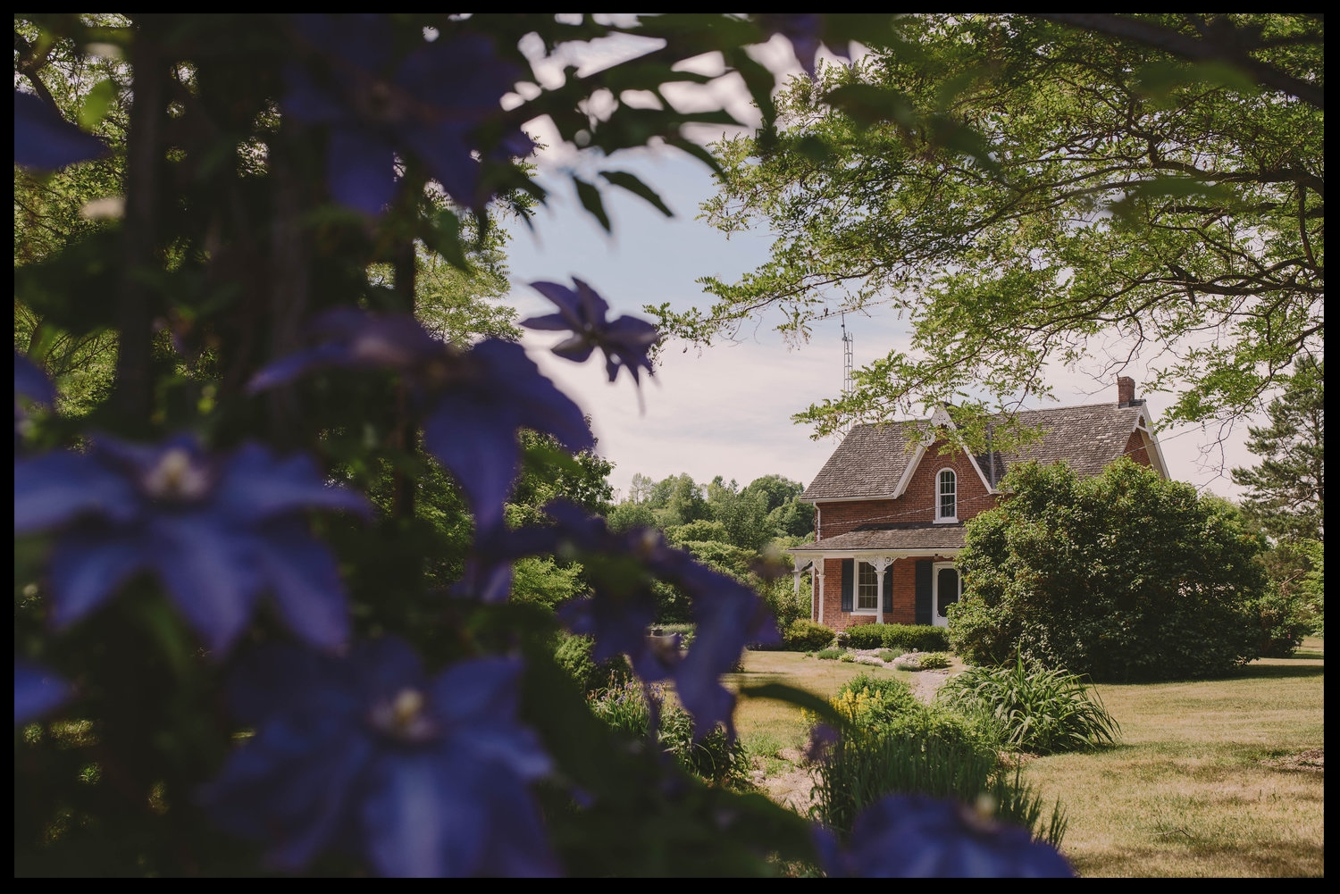 house front with purple flowers.jpg