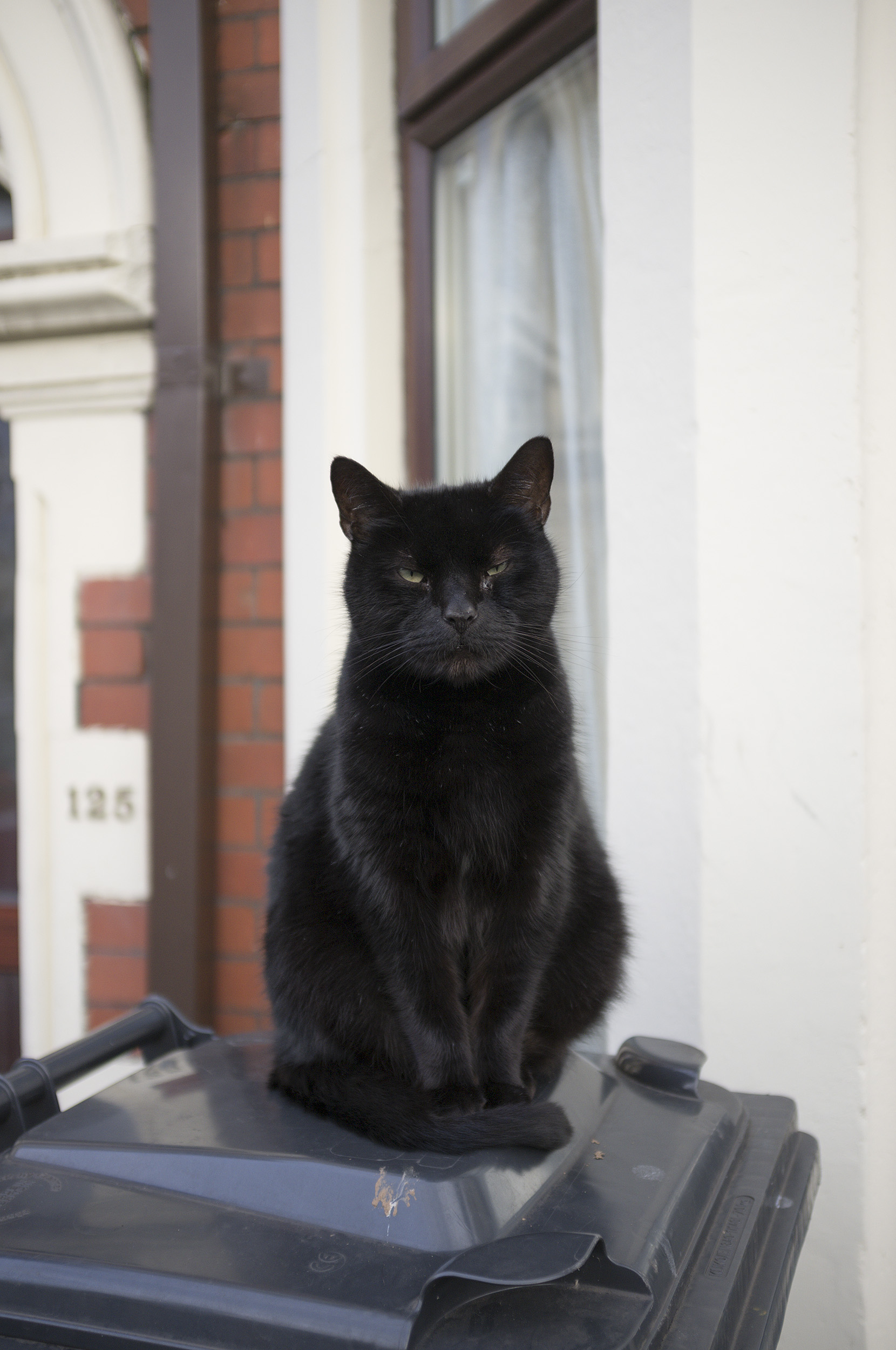 Street Pussy, Cardiff, January 1st 2019