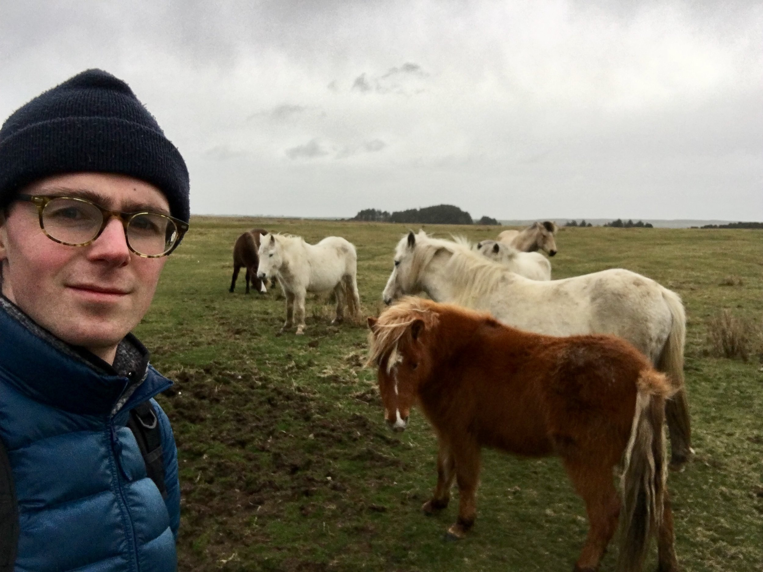 Ponies, Davidstow, March 2019
