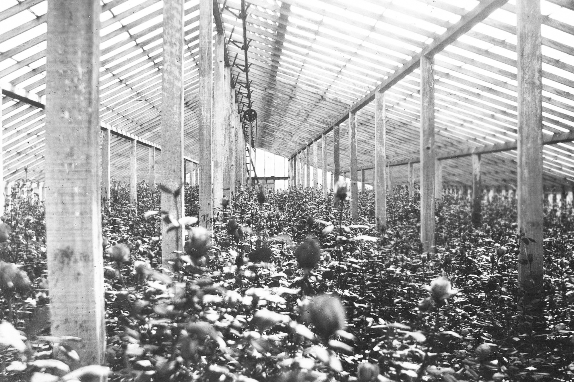 Inside Greenhouses 7.jpg