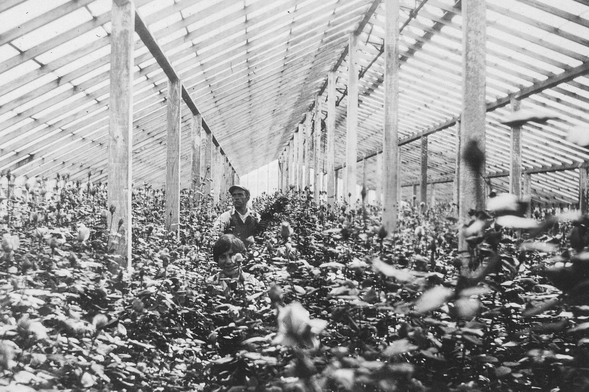 Inside Greenhouses 3.jpg