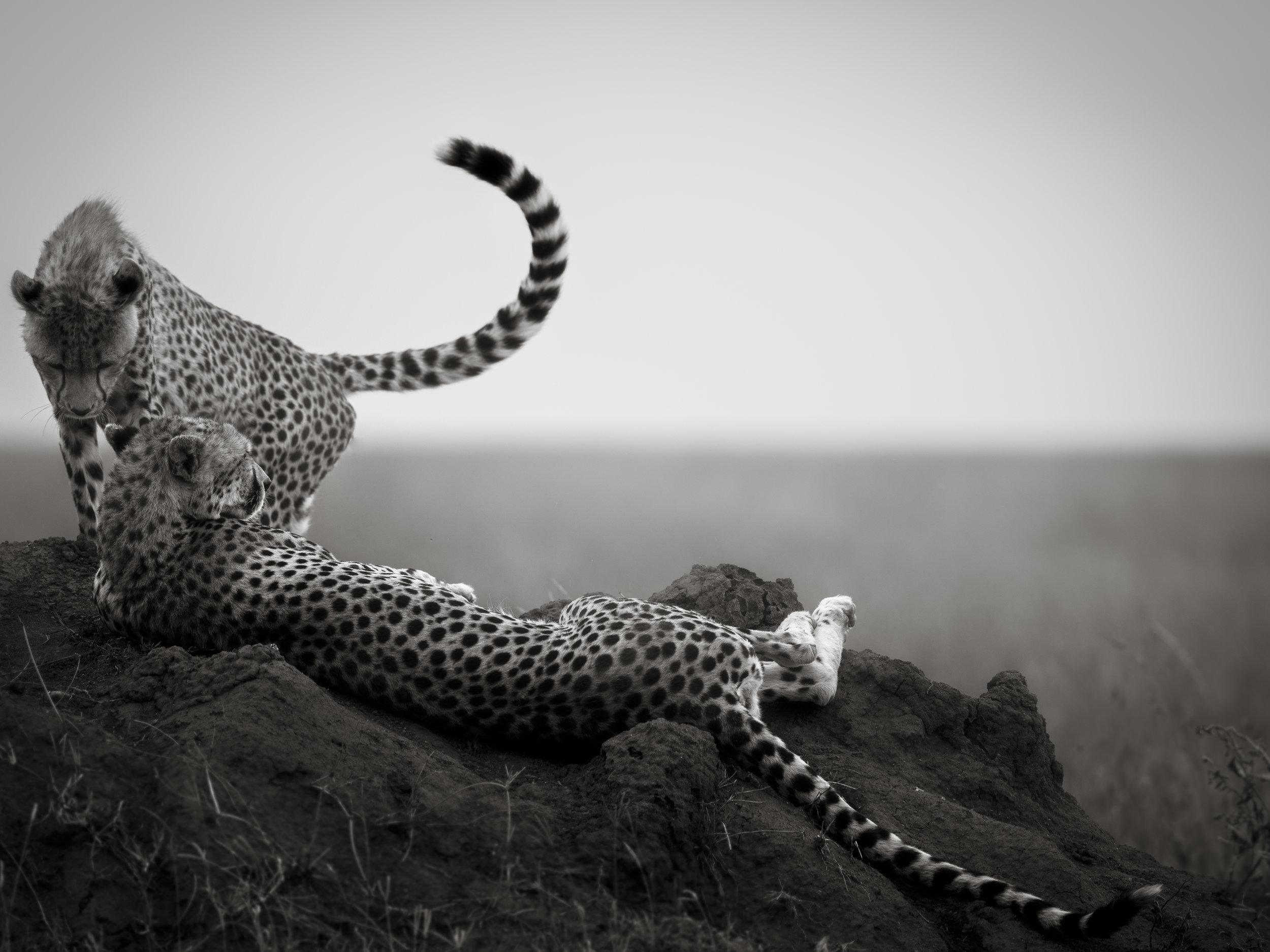 Recent Africa-27.jpg