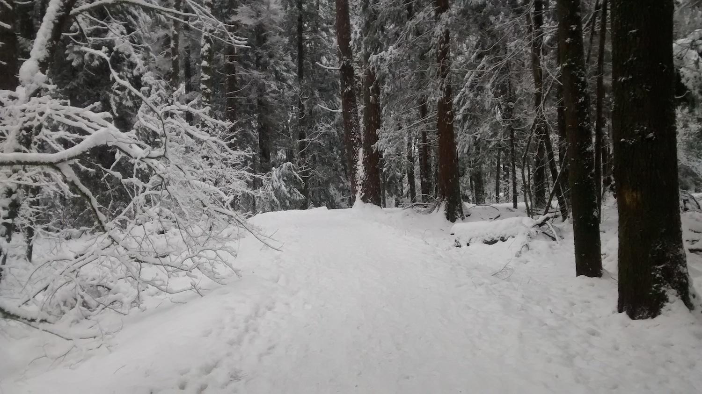 winterwonderland2016_ii.jpg