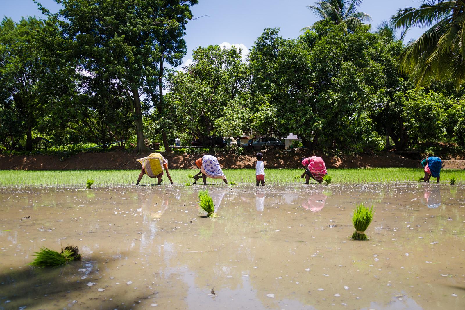 25082015-Sahas-Nathu-Nadudhal-119.jpg