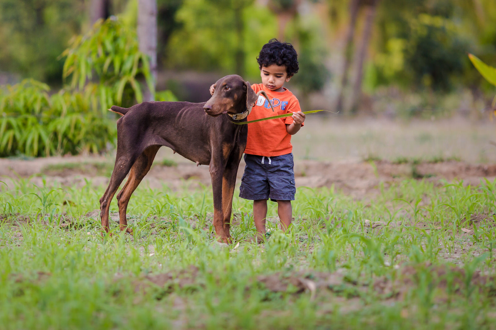 20150328-Sahas-With-Dog-in-fileds-179-Edit.jpg