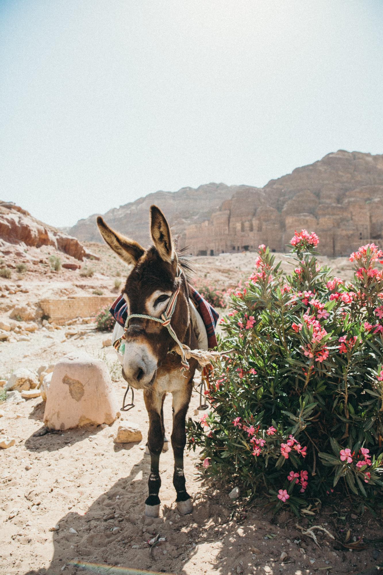 Cute lil donkey! They were everywhere.