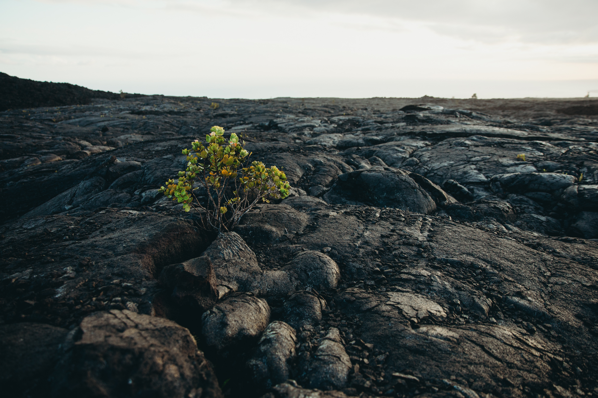 Hawaii_HBGOODIE2018 (45 of 56).jpg
