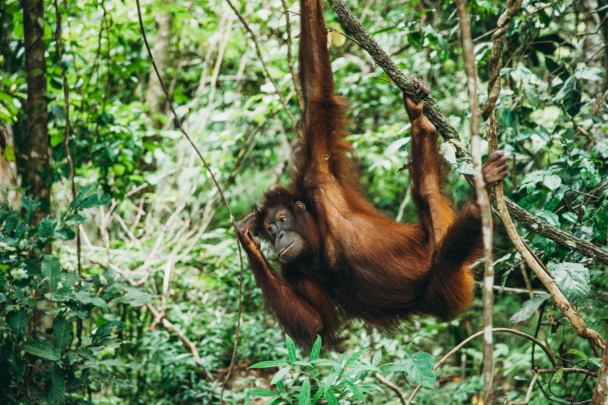 Borneo_HBGOODIE2018 (38 of 38).jpg