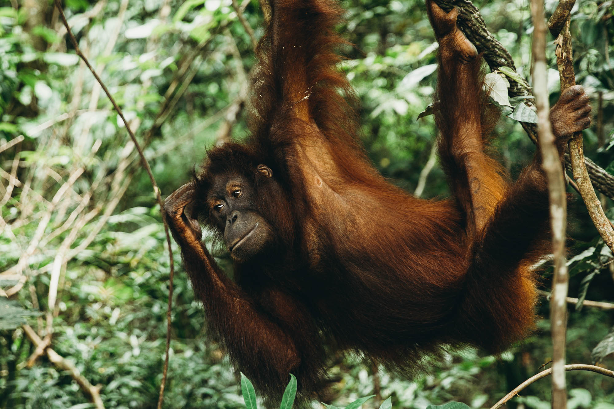 Borneo_HBGOODIE2018 (6 of 6).jpg