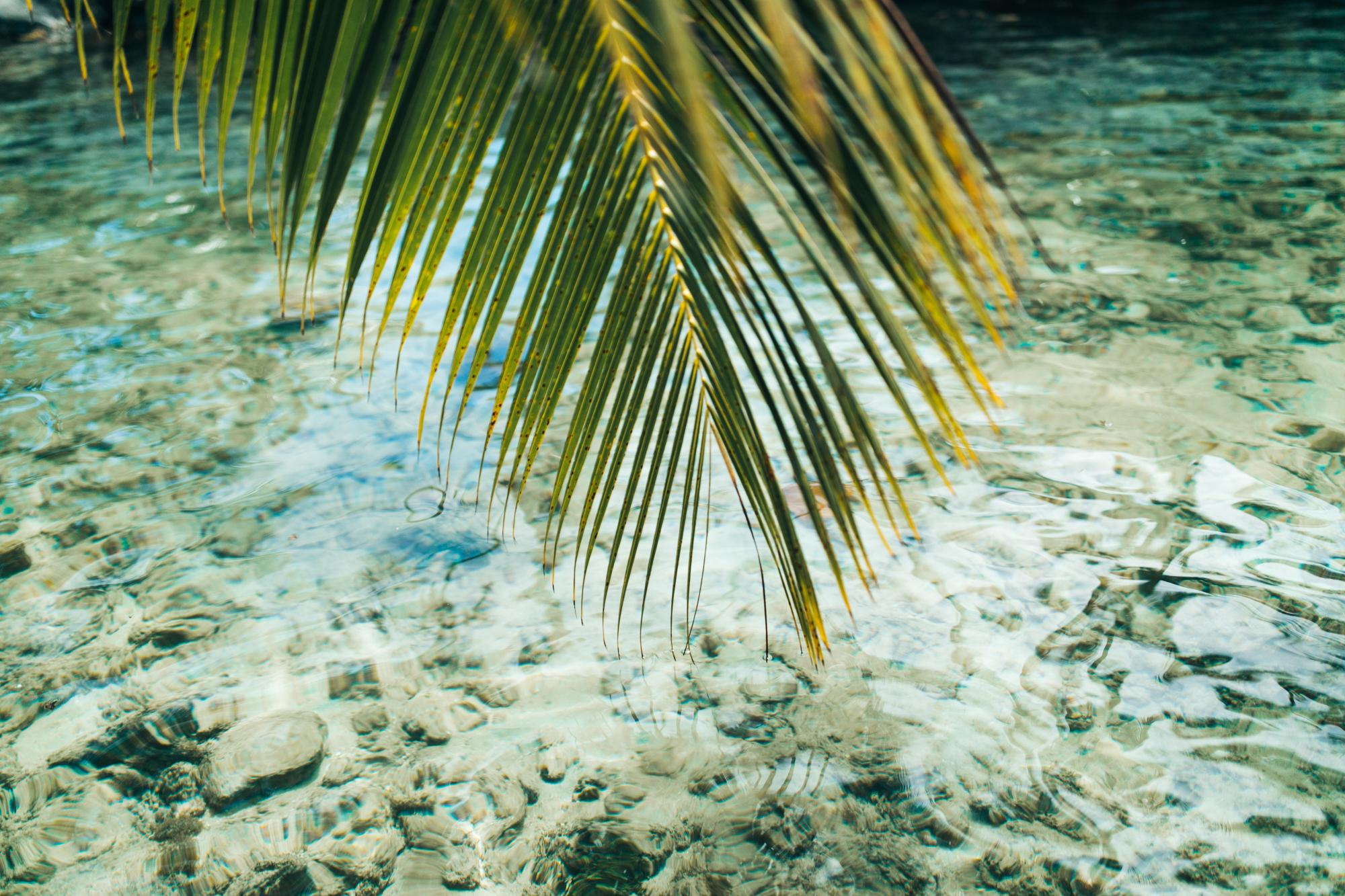 Tahiti_HBGOODIE2018 (23 of 82).jpg