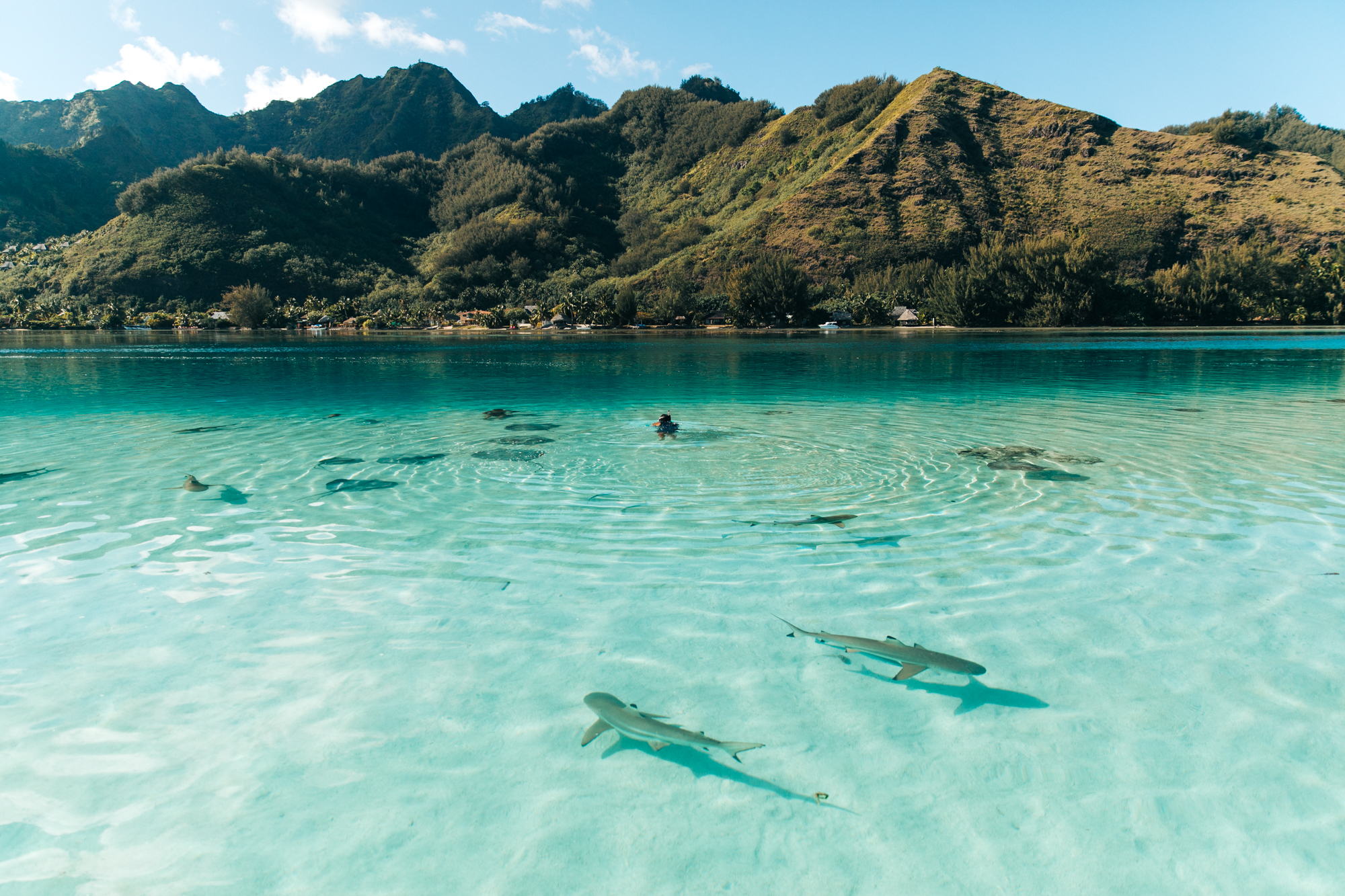 Tahiti_HBGOODIE2018 (37 of 82).jpg