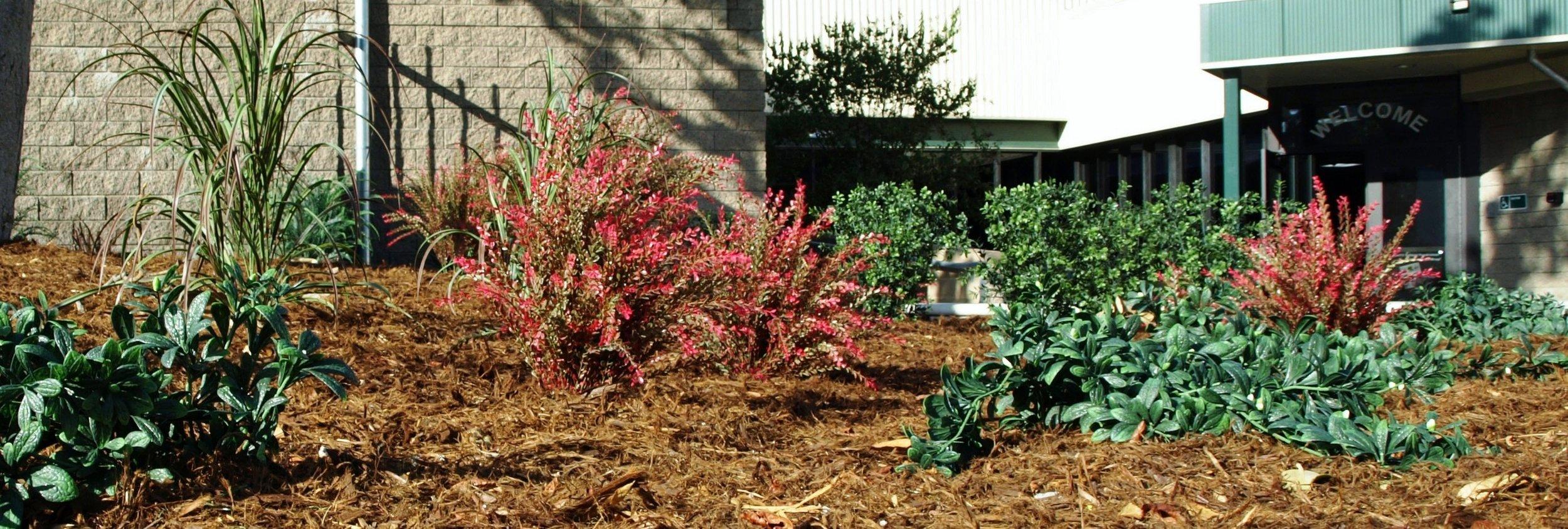 Panorama plants.jpg
